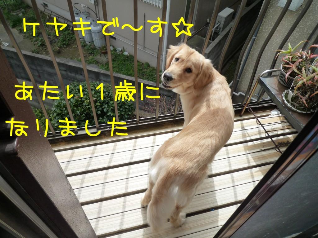 205 1024x768 アイムス成犬用★1歳の誕生日★