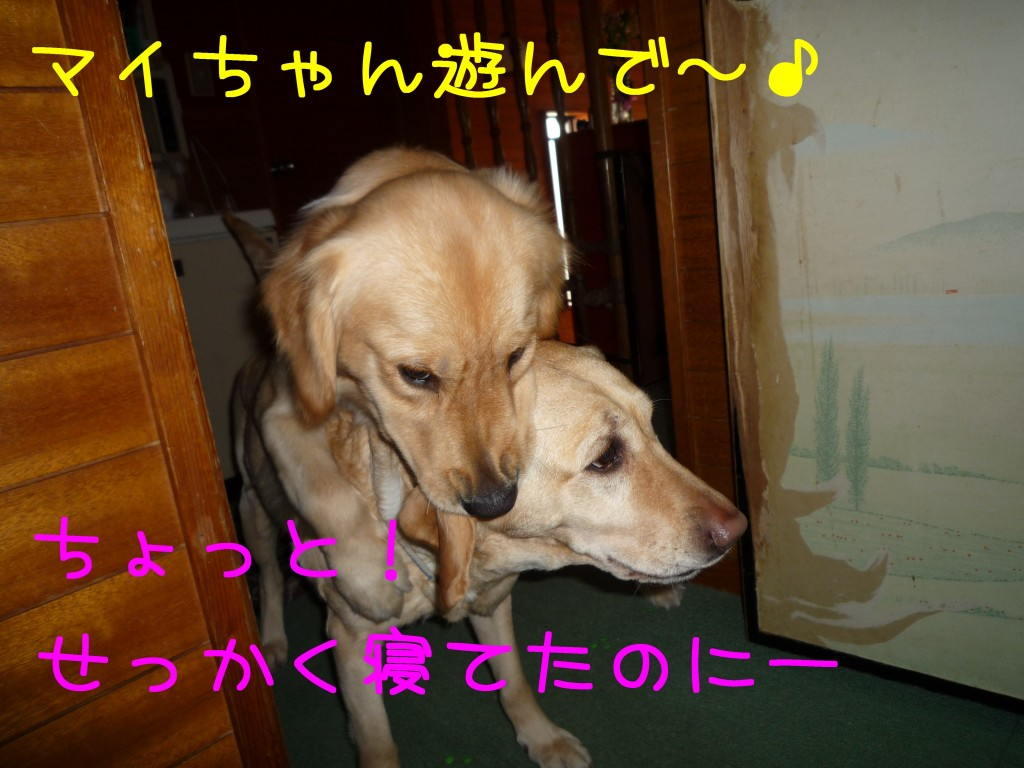 209 1024x768 アイムス成犬用★1歳の誕生日★