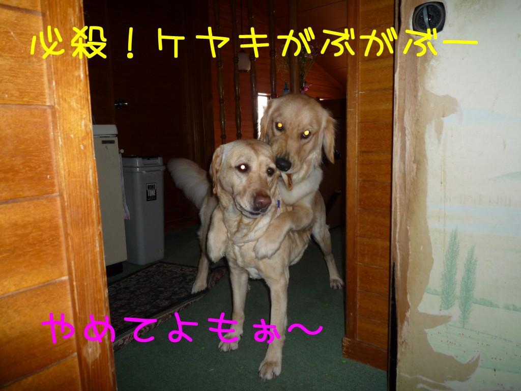 210 1024x768 アイムス成犬用★1歳の誕生日★