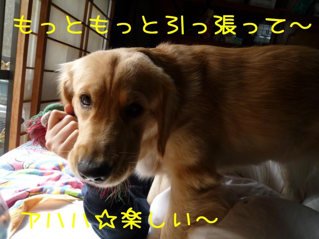213 1024x768 アイムス成犬用★1歳の誕生日★