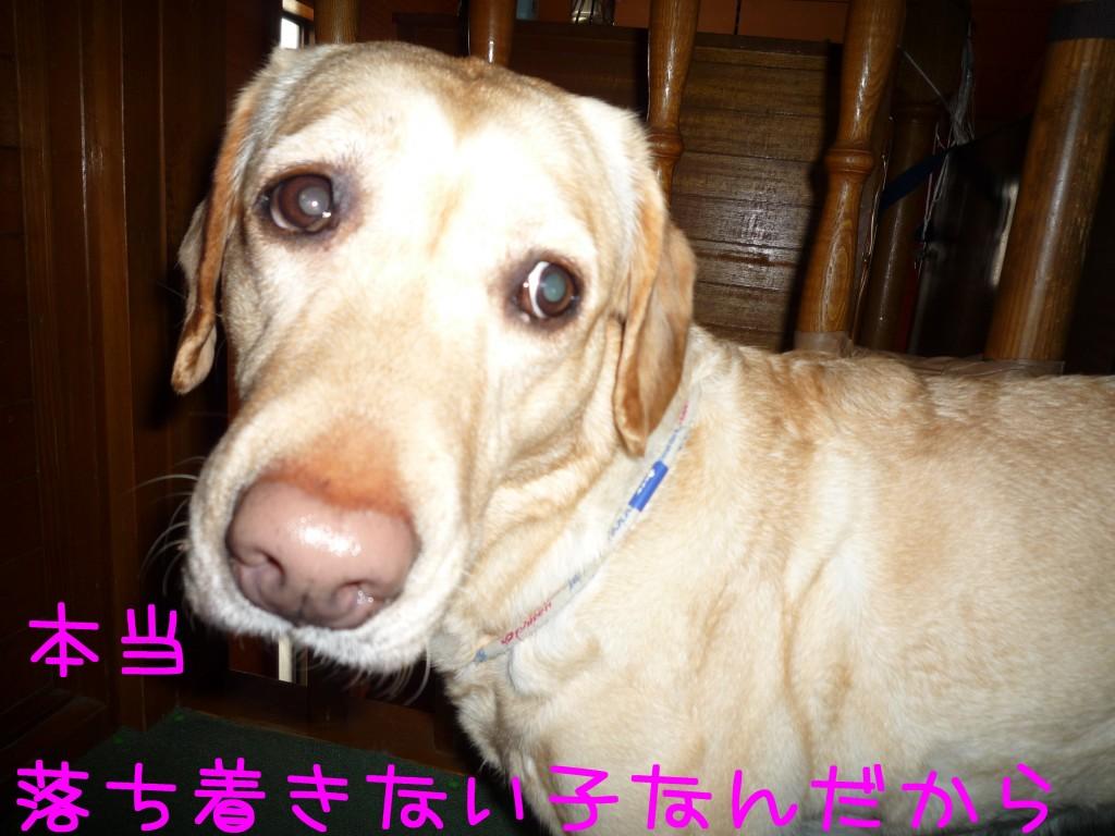 214 1024x768 アイムス成犬用★1歳の誕生日★