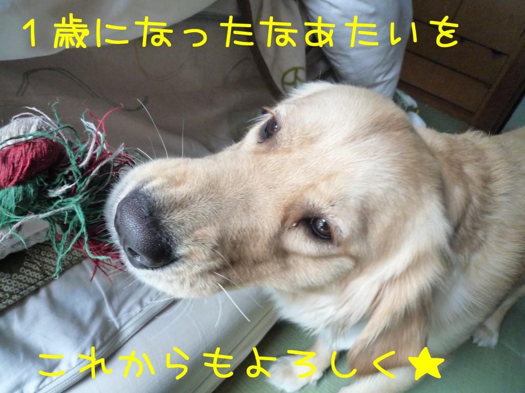 215 1024x768 アイムス成犬用★1歳の誕生日★