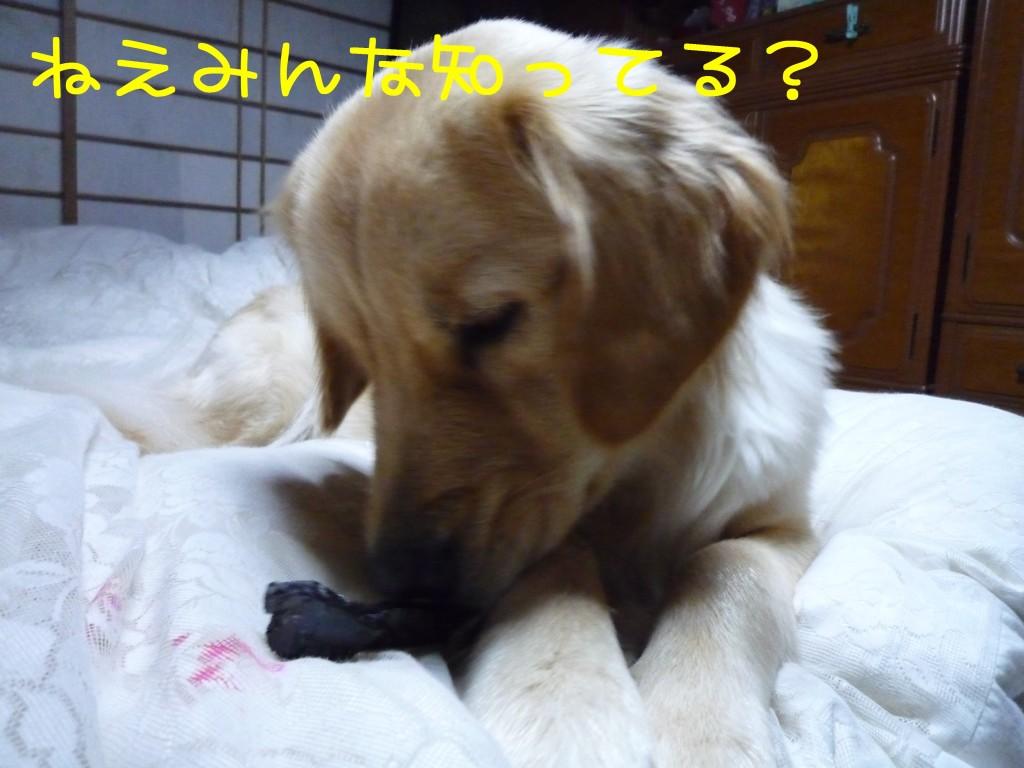 254 1024x768 備長炭 sumi eater   keyaki★