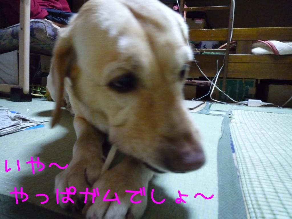 256 1024x768 備長炭 sumi eater   keyaki★