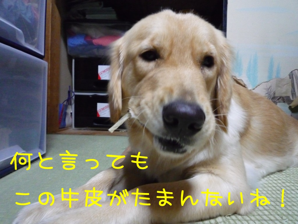 259 1024x768 備長炭 sumi eater   keyaki★
