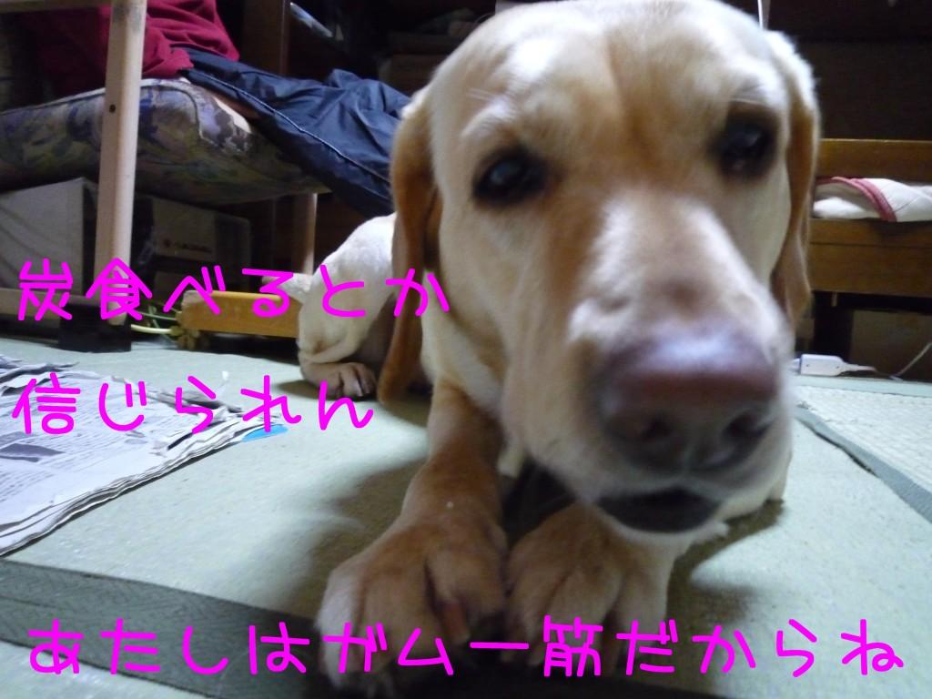 260 1024x768 備長炭 sumi eater   keyaki★
