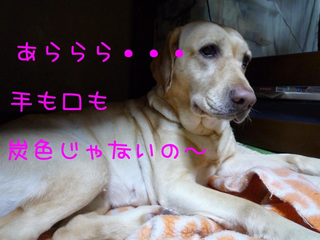 264 1024x768 備長炭 sumi eater   keyaki★