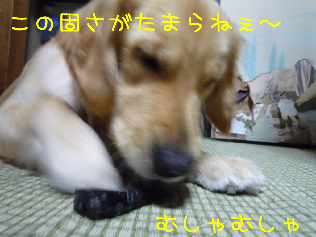 265 1024x768 備長炭 sumi eater   keyaki★