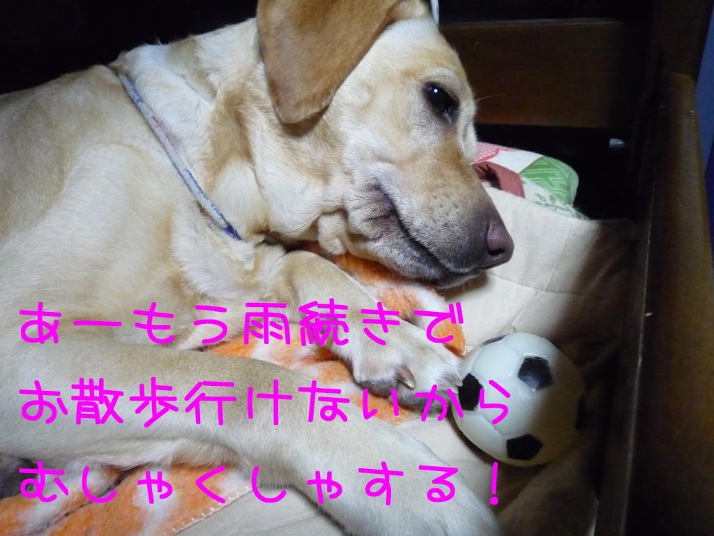 268 1024x768 備長炭 sumi eater   keyaki★