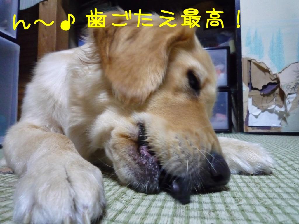 269 1024x768 備長炭 sumi eater   keyaki★