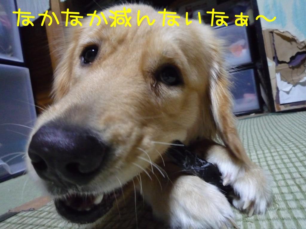 271 1024x768 備長炭 sumi eater   keyaki★