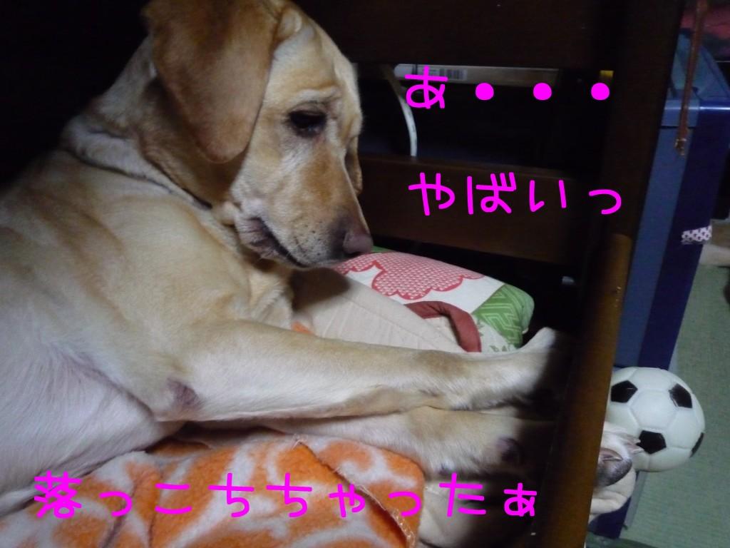 274 1024x768 備長炭 sumi eater   keyaki★