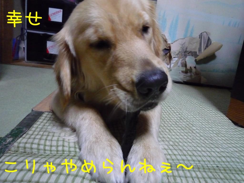 276 1024x768 備長炭 sumi eater   keyaki★