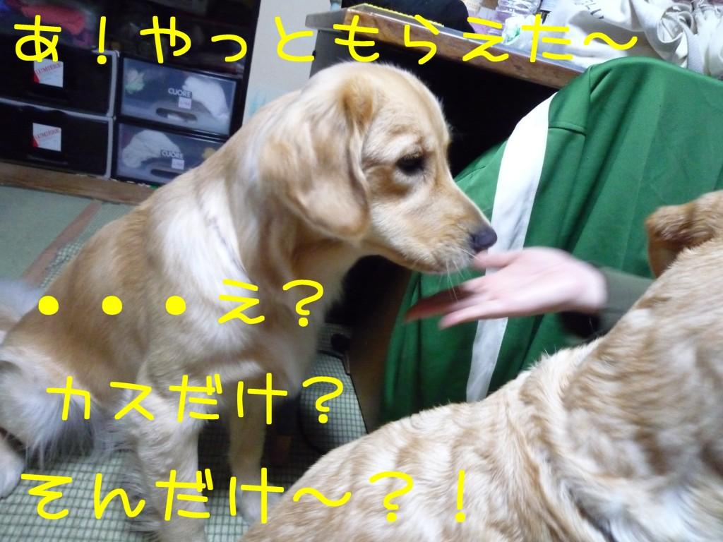 300 1024x768 長女 大阪から帰省!!