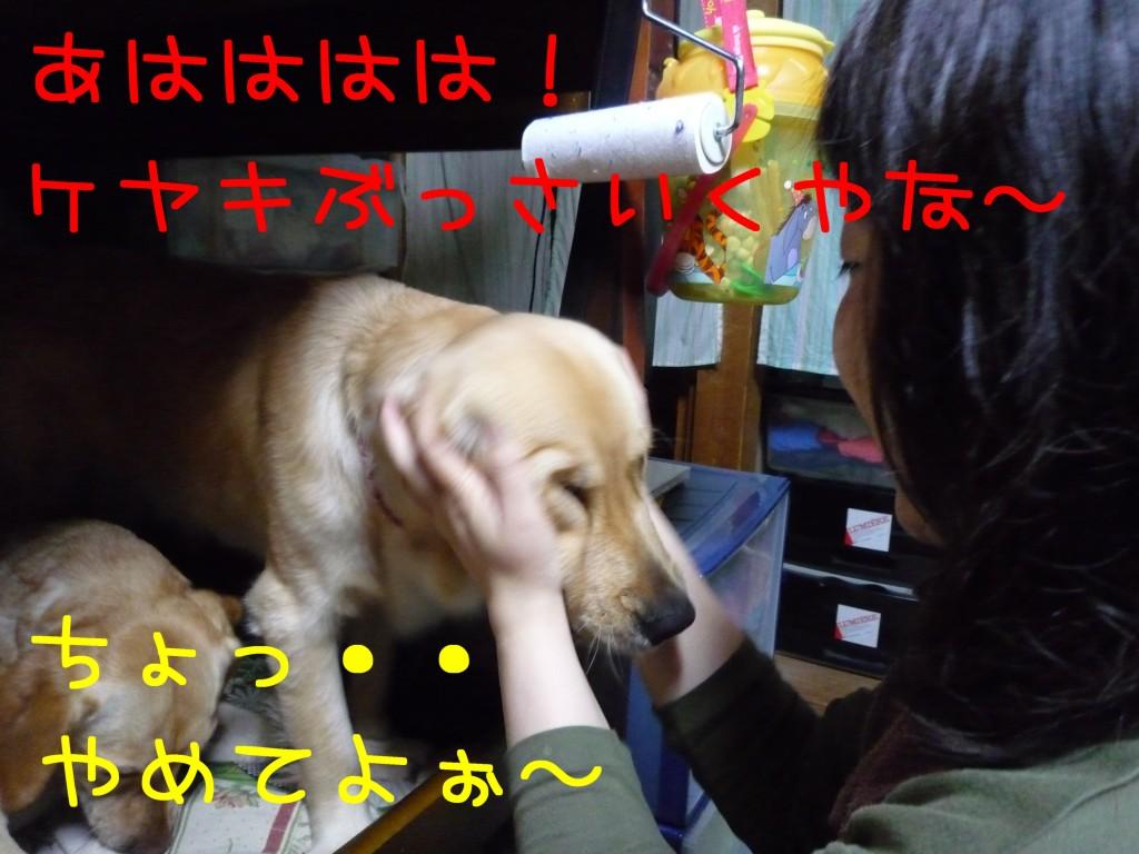 303 1024x768 長女 大阪から帰省!!