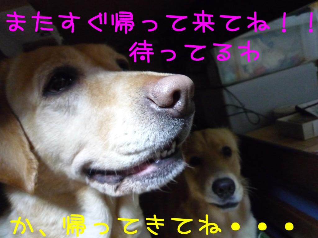 305 1024x768 長女 大阪から帰省!!